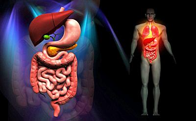 sistema_digestivo_dreamdesi